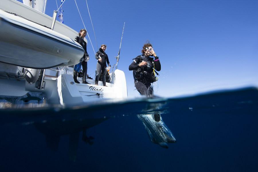 Наше исследование Таволары продолжается дайвингом и подводным плаванием в великолепных водах заповедника